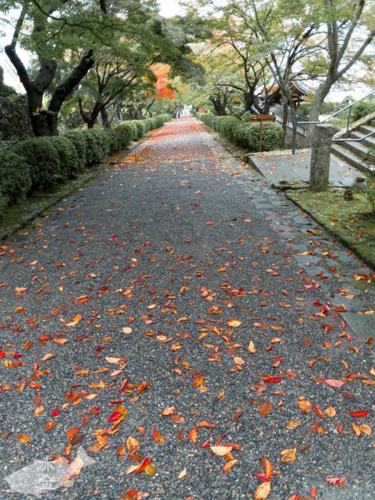 山門へ続くまっすぐな道。雨で濡れた落ち葉がアクセント