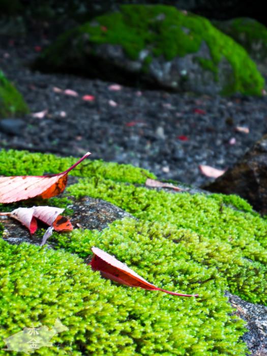 みずみずしい色合いの苔