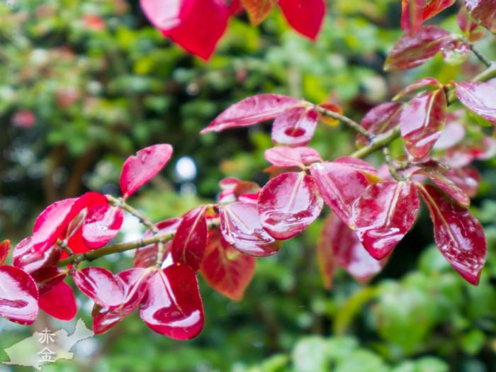雨を受ける葉