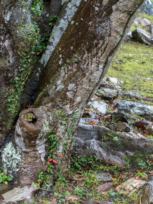 苔むした木のゴツゴツ感を出したかった