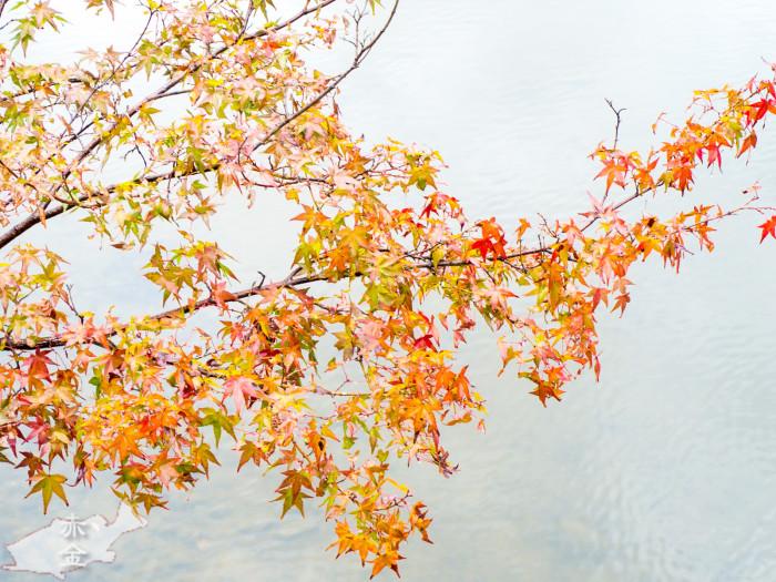 葉っぱのニュアンスがが飛ぶギリギリまでハイキーに