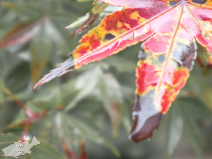 葉っぱの上に雨がたまっています