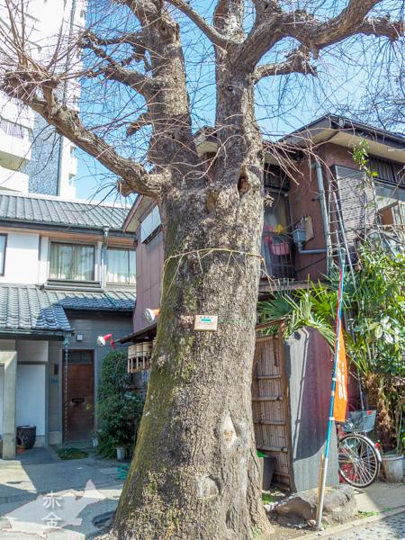 樹齢700年の銀杏の木。訪れたのは冬だったので葉は全部落ちています。