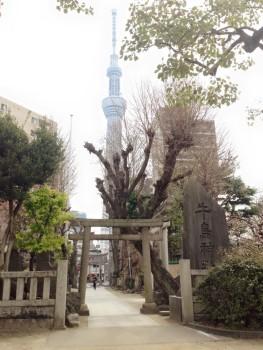 牛嶋神社の鳥居越しのスカイツリー。こち亀でも紹介されてました