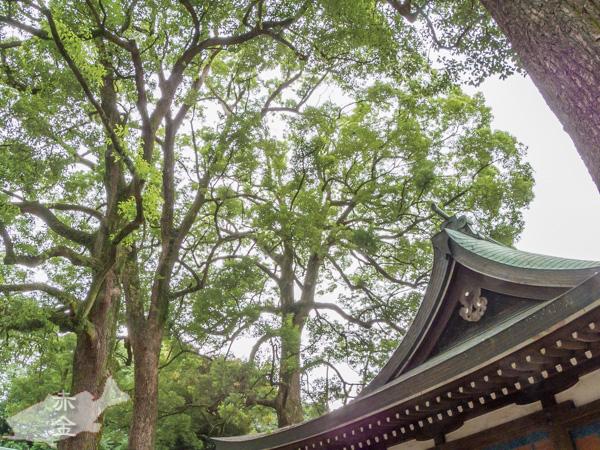 神楽殿を取り囲む木々の大きさが歴史の古さを語ります