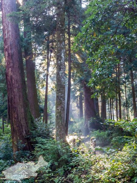 樹齢の高い杉木立に差し込む木漏れ日が幻想的