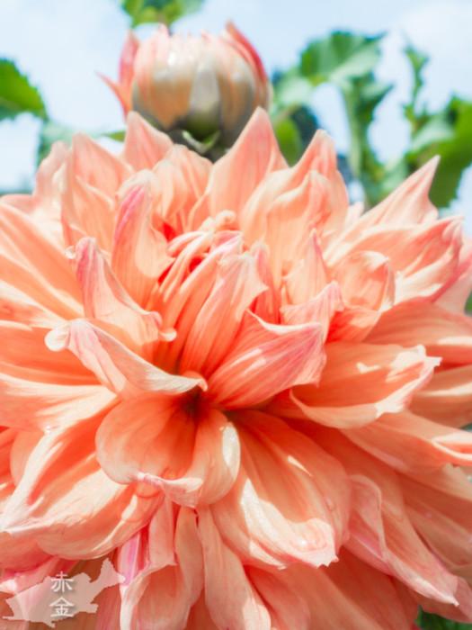 おまけ:境内に咲いていた花