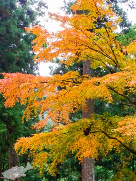 天狗の小道の途中でみつけた、グラデーションがきれいな紅葉