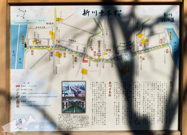 新川千本桜の説明看板。