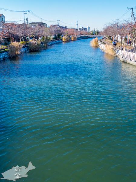 桜橋から流れを見る