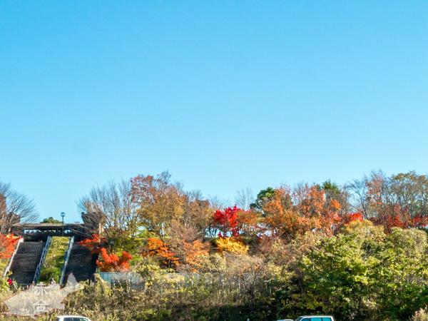 小名木川の起点から対岸を見ると紅葉のキレイそうな場所が
