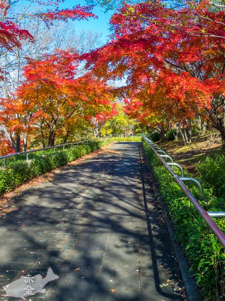 大島小松川公園風の広場