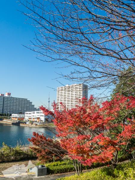 旧中川から小名木川が始まる地点とスカイツリーを見渡す