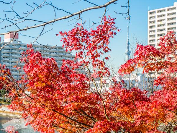 紅葉越しのスカイツリー